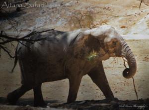 safari-aitana